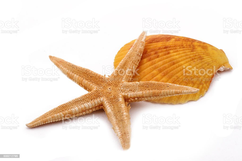 The Starfish with shell on the white background stock photo