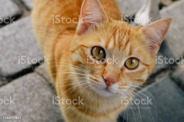 The staring cat picture id1144717811?b=1&k=6&m=1144717811&s=612x612&h=vu6qktemfwytge4hqsqee41ao uymhzgeajldnaemvo=