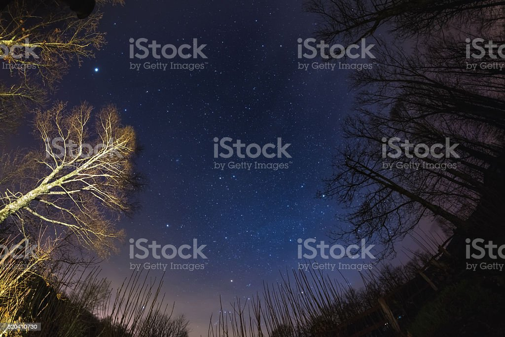 The starry sky from woodland, ultra wide fisheye view stock photo