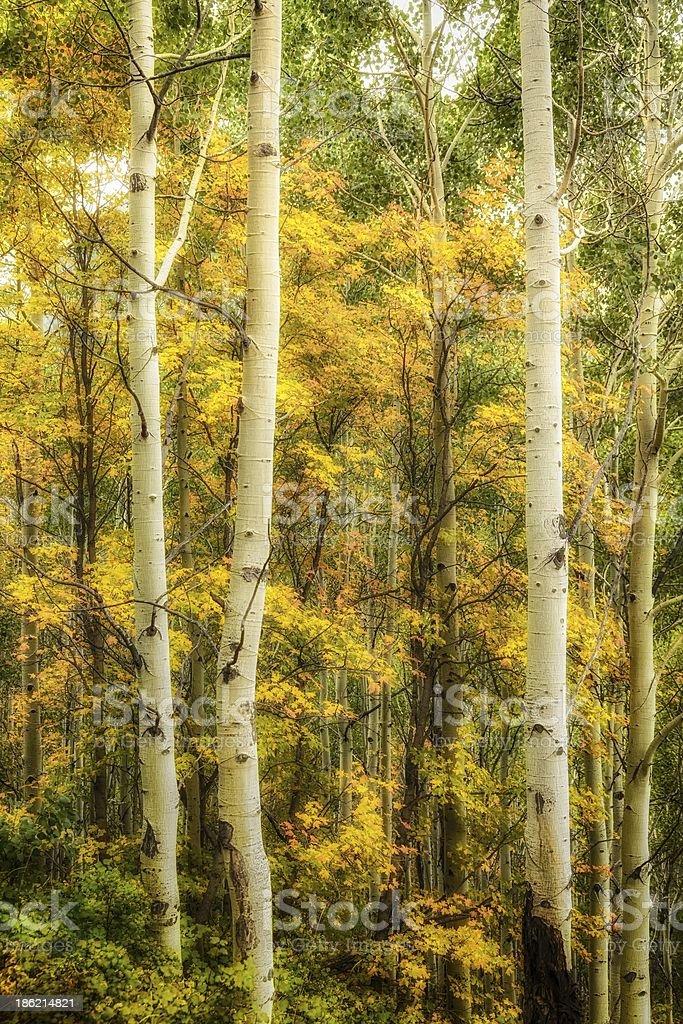 The Start of Autumn stock photo