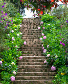 The steps are adorned with hydrangeas on both sides leading to the house in the highlands