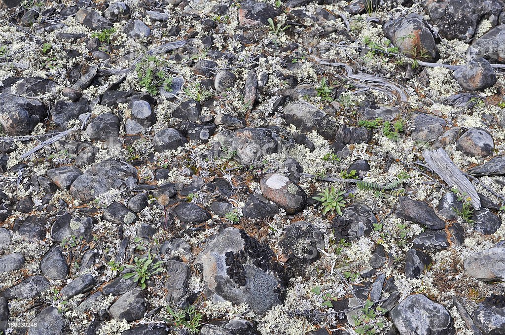 The stony soil. royalty-free stock photo