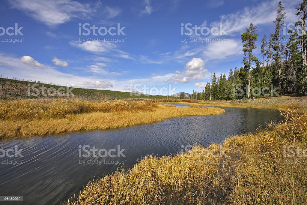 The stream in park Yellowstone royalty-free stock photo