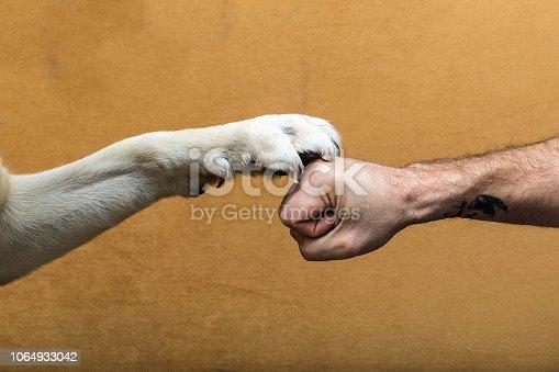 istock El pacto mas fuerte del mundo, el perro y el hombre 1064933042
