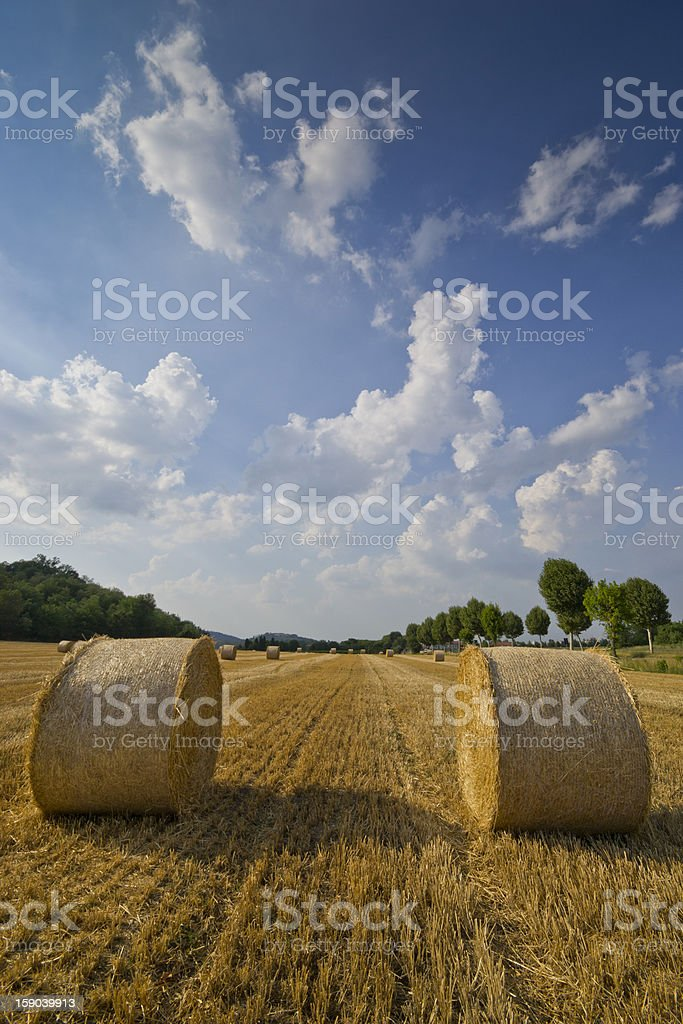 The summer harvest royalty-free stock photo