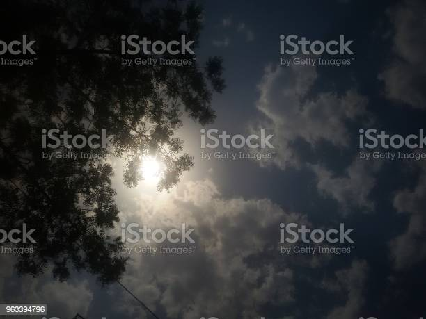 Letnie Słońce Za Drzewem - zdjęcia stockowe i więcej obrazów Abstrakcja