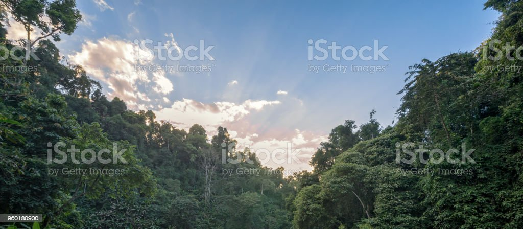 The sun comes through the clouds above green forest trees, nature...