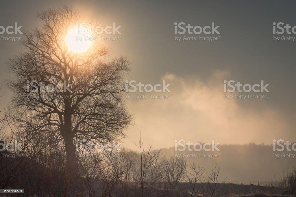 O sol dirige a névoa do campo congelado, belamente delineando a silhueta da árvore, na manhã de primavera gelada - foto de acervo