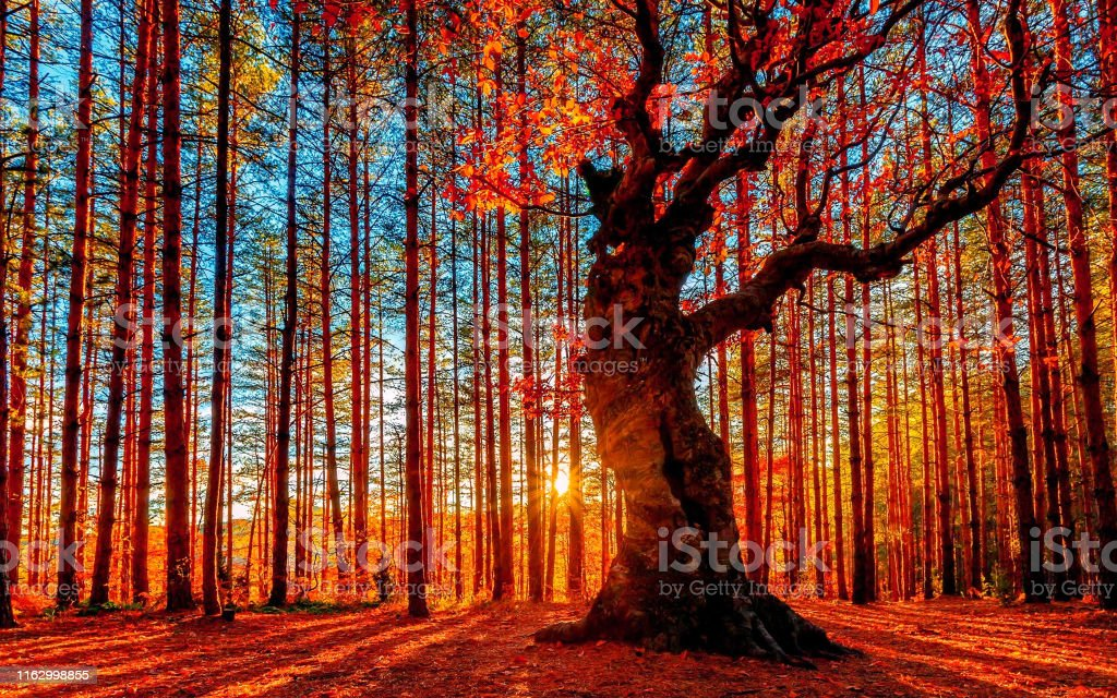 The sun goes down behind the autumn forest - Royalty-free Alasca Foto de stock