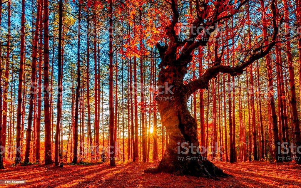 太陽在秋天的森林後面下山 - 免版稅亞伯達省圖庫照片