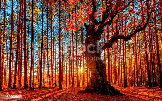 istock The sun goes down behind the autumn forest 1162998855