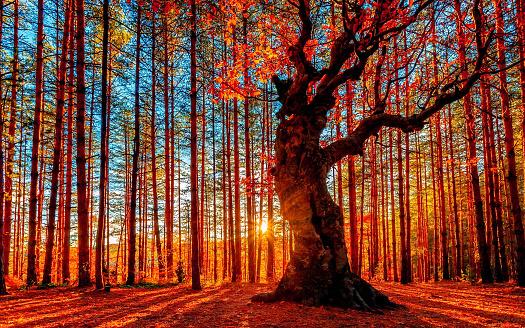 太陽在秋天的森林後面下山 照片檔及更多 亞伯達省 照片