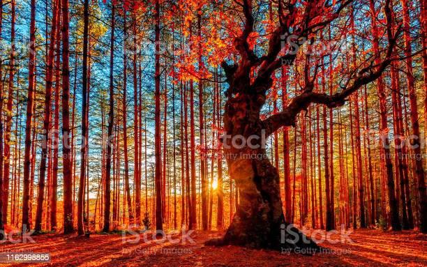 The Sun Goes Down Behind The Autumn Forest - Fotografias de stock e mais imagens de Alasca