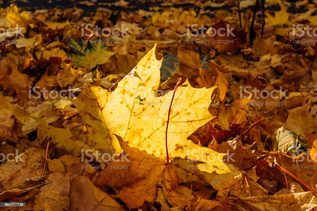 The sun illuminates the colorful autumn leaves on the ground stock photo