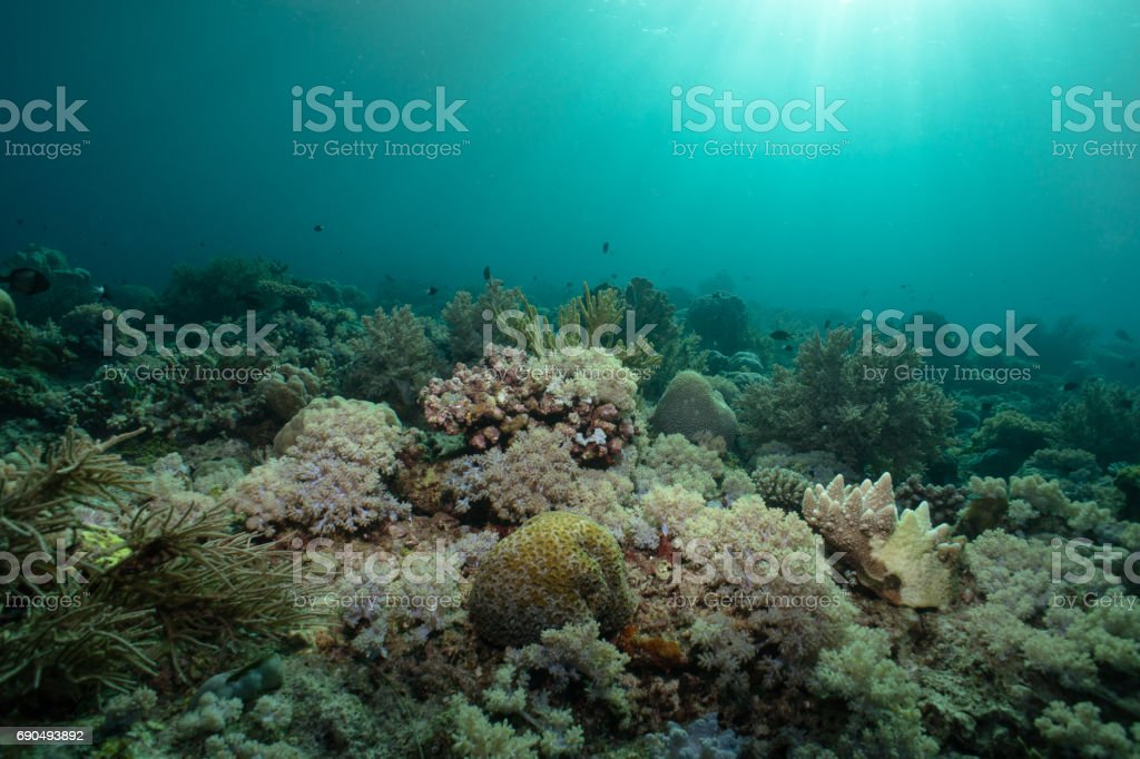 The sun shines its rays down on this healthy reef with soft and hard corals. stock photo