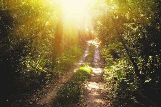 the sun shines onto a path through a natural forest - jardim do eden - fotografias e filmes do acervo