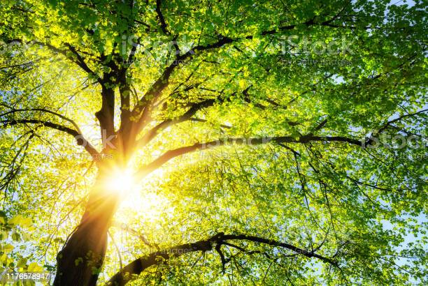 Photo of The sun shining through the branches of a tree