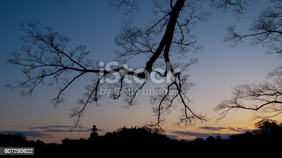 The sunset and pine tree silhouette, twilight