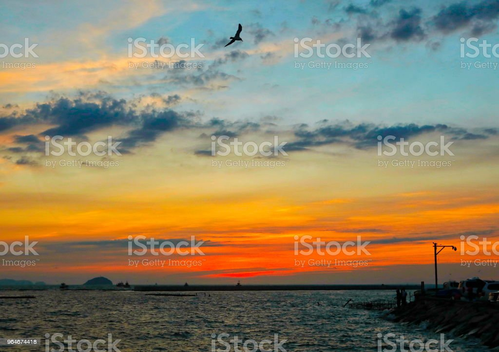 The sunset and seagull royalty-free stock photo