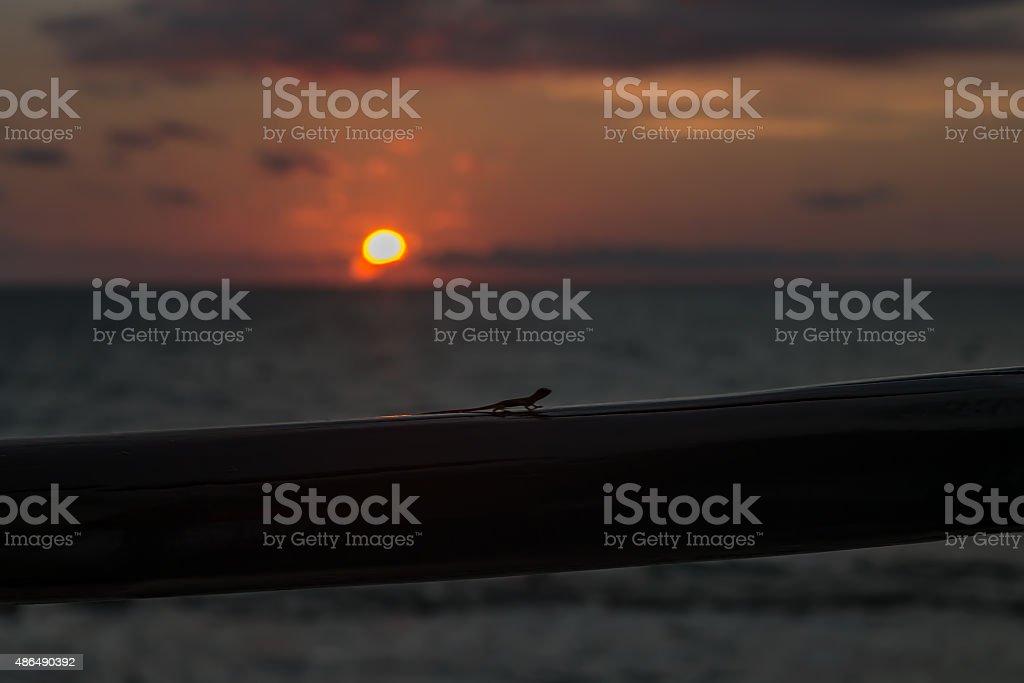 Den Sonnenuntergang und der lizard – Foto