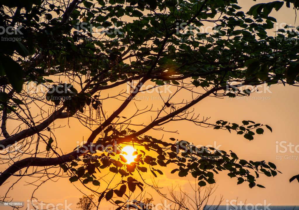 The sunset behind the tree royalty-free stock photo