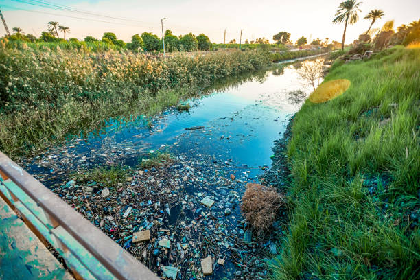 The sunset over the canal is polluted by rubbish and plastic between the palms stock photo