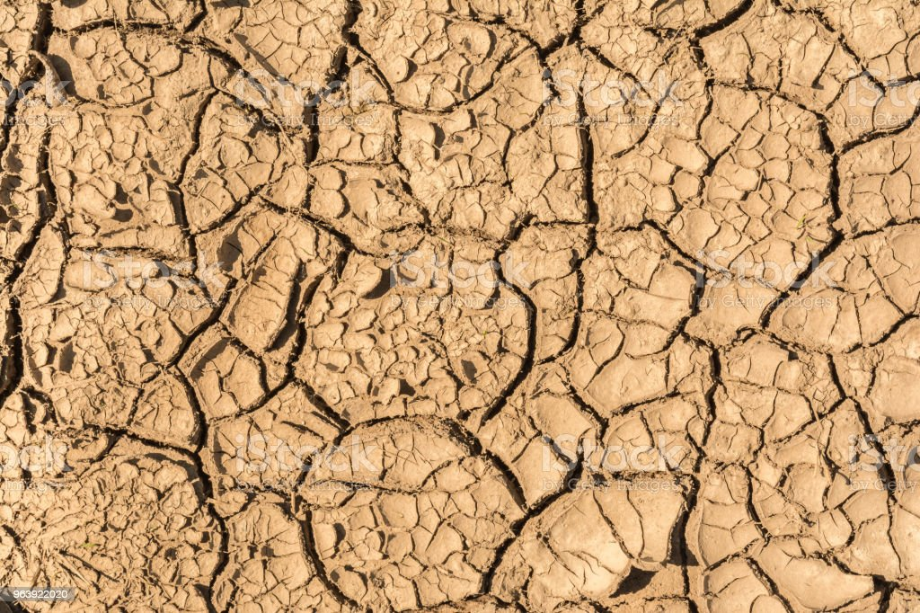 the surface texture dry cracked earth, close-up abstract background - Royalty-free Abstract Stock Photo