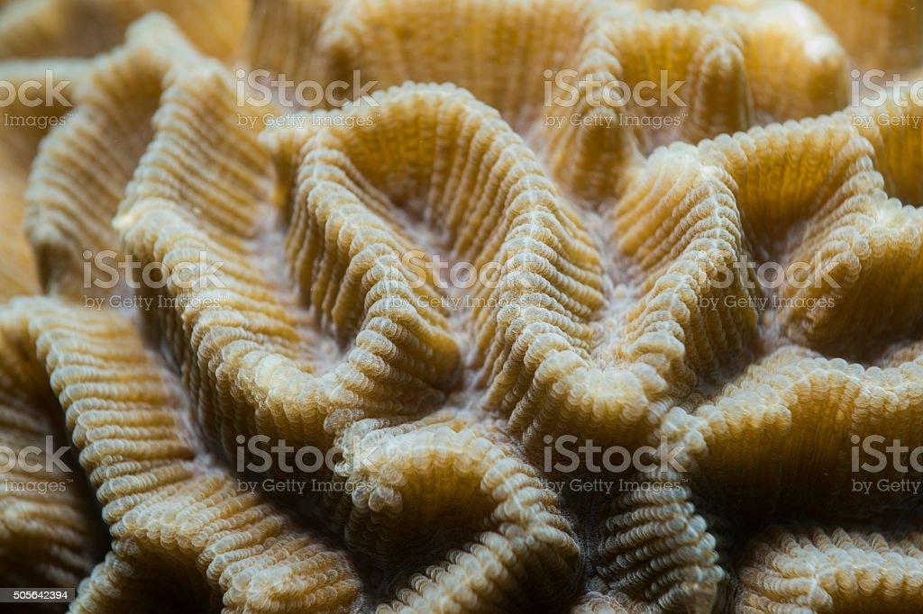 Fotografía de Textura De La Superficie De Coral Duro y más banco de ...