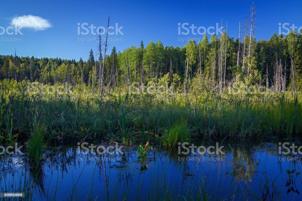 O pântano na tundra, no norte da Península de Kola. - foto de acervo