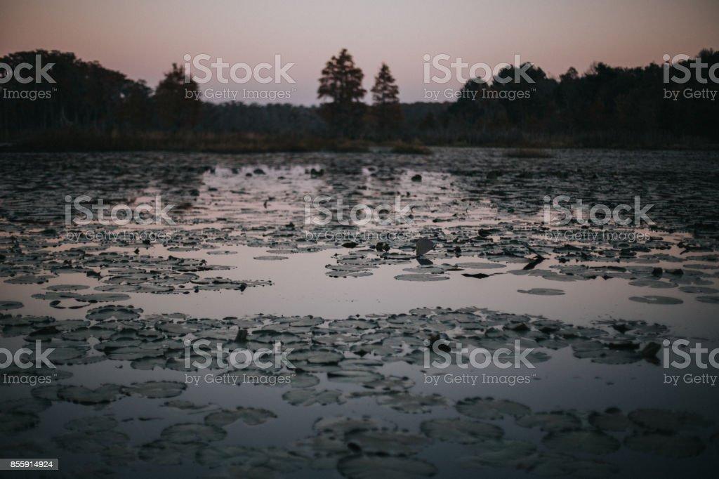 The Swamp stock photo