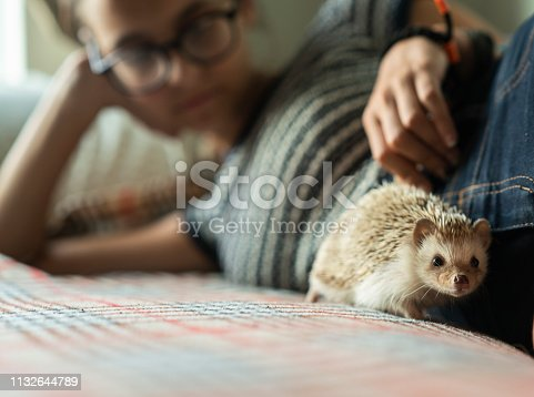The teenager 16-years-old girl playing with her pet White African Hedgehog, which is the true pet and doesn't exist in nature.