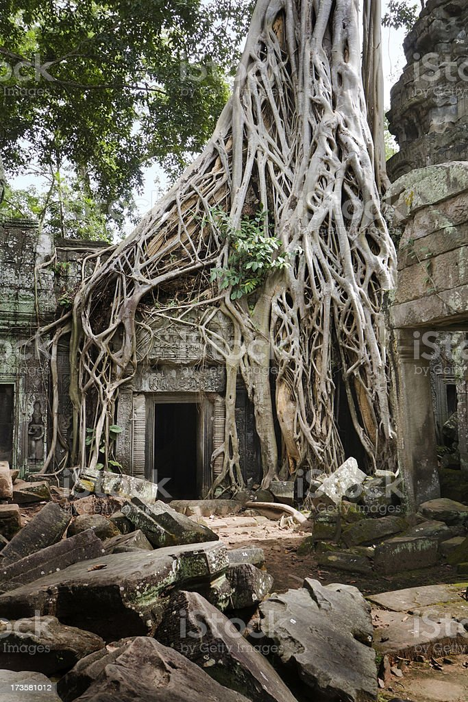The Temple Ruin of Ta Prohm royalty-free stock photo