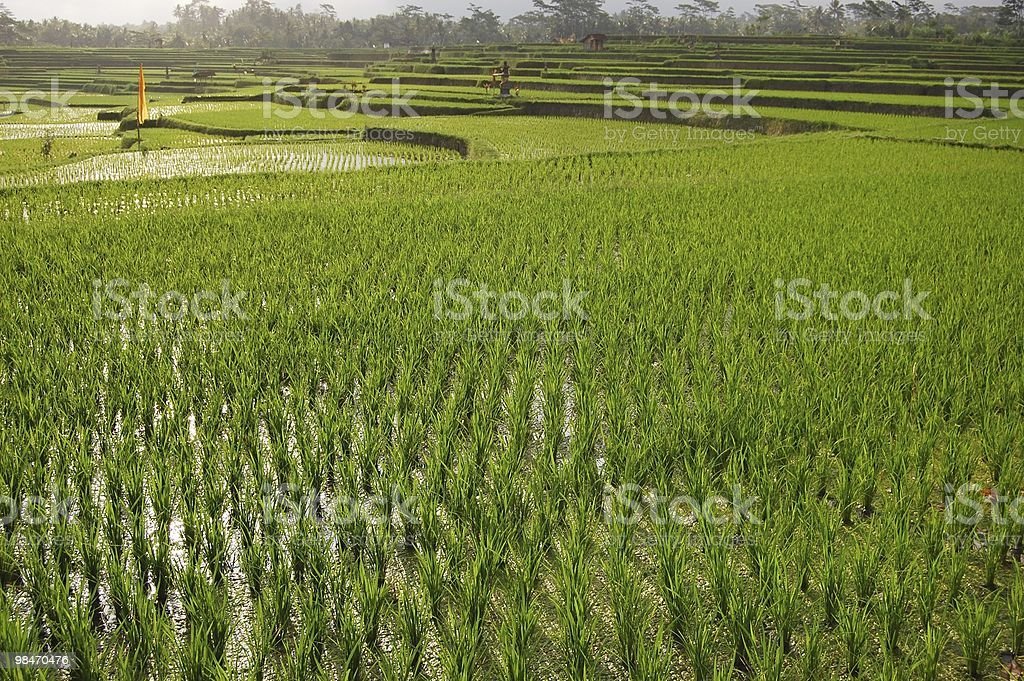 The terrace in Asia royalty-free stock photo
