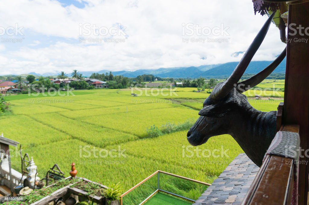 The terrace of rice field and head of deer decorated on the wooden wall. stock photo