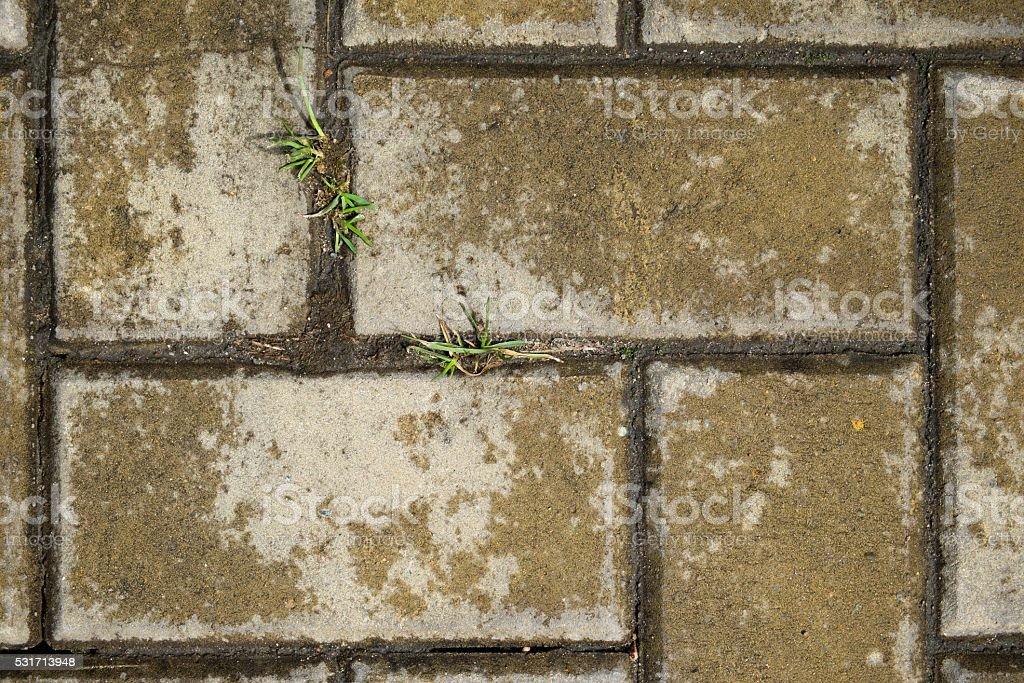 La trama di piastrelle con erba cemento fotografie stock e altre