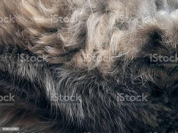 The texture of fur picture id508540362?b=1&k=6&m=508540362&s=612x612&h=991x9mgvi myt8parllkdwxqrrpyaf7zi0an95ytjtk=