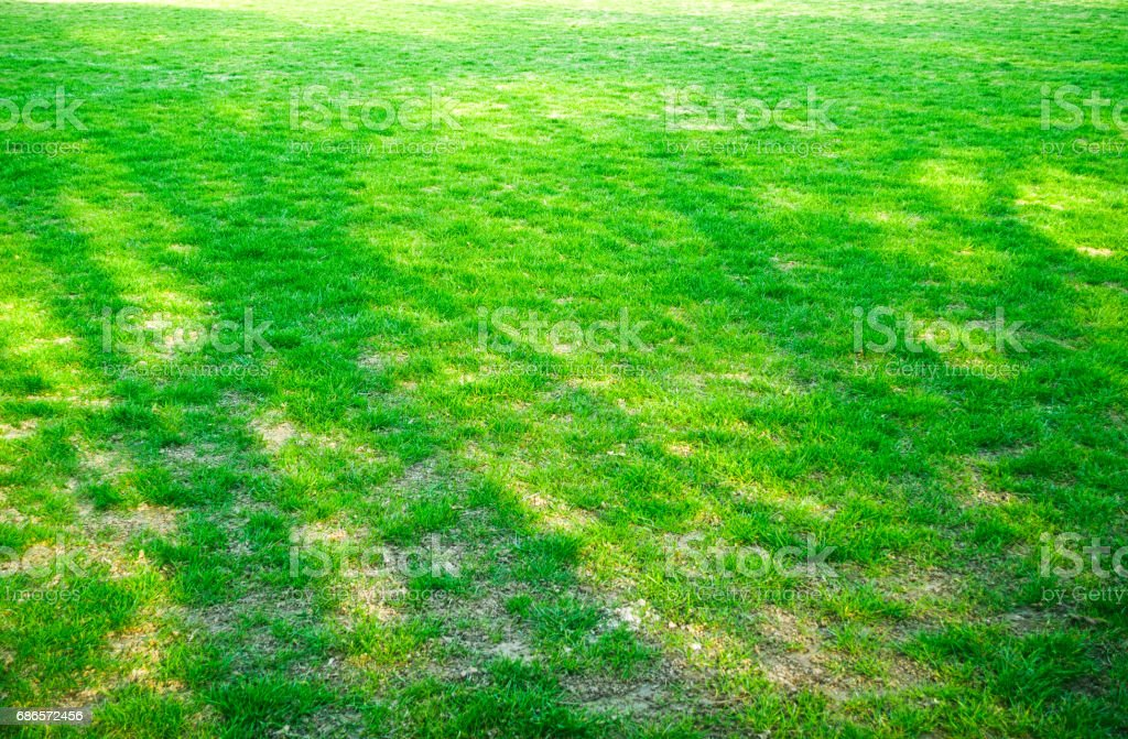 The texture of green grass field royalty-free stock photo