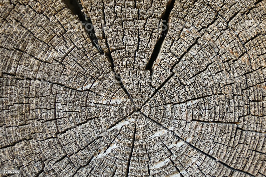The texture of old wood, wood block stock photo