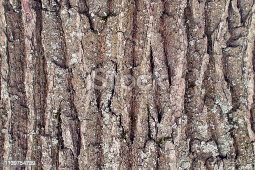 The texture of the bark of an old tree close-up. An abstract background for layouts.