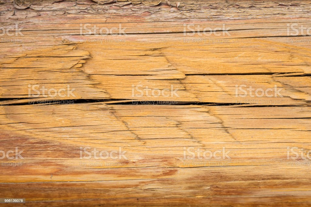 The texture of the dried log stock photo