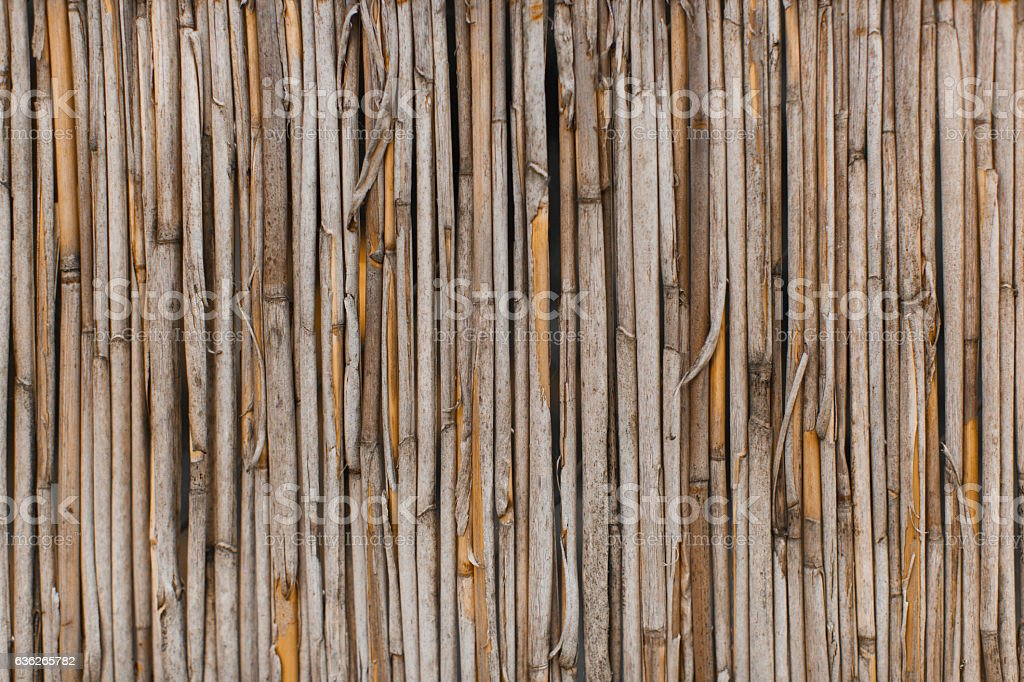 The texture of the dry reeds. stock photo