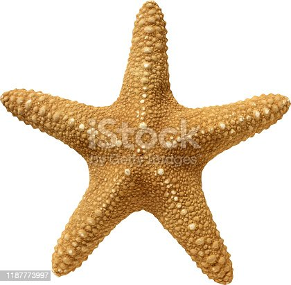 The texture of starfish in yellow on a white background