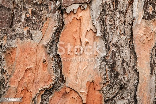 istock The texture of the tree bark for the designer 1078658552