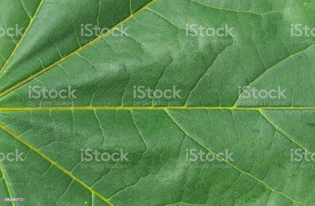 The texture of wood sheet Стоковые фото Стоковая фотография