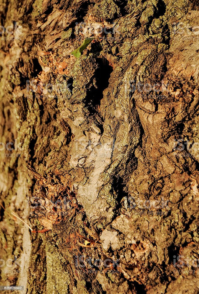 The texture stock photo