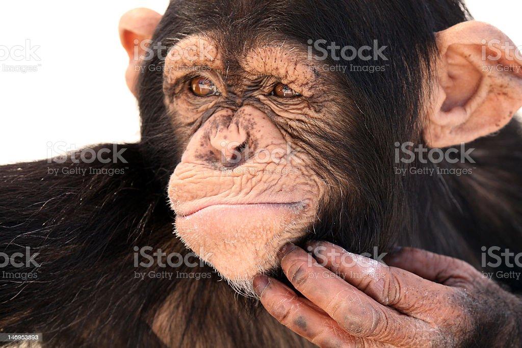 The Thinker stock photo