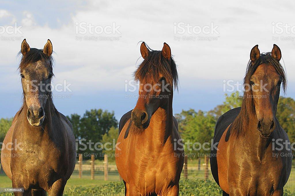 The Three Amigos royalty-free stock photo