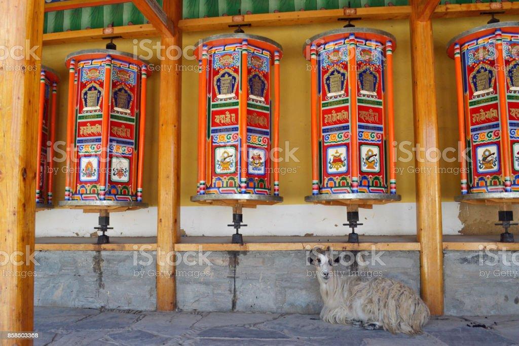 The Tibetan kora or pilgrimage and prayer wheels in Xiahe (Labrang), Amdo Tibet stock photo