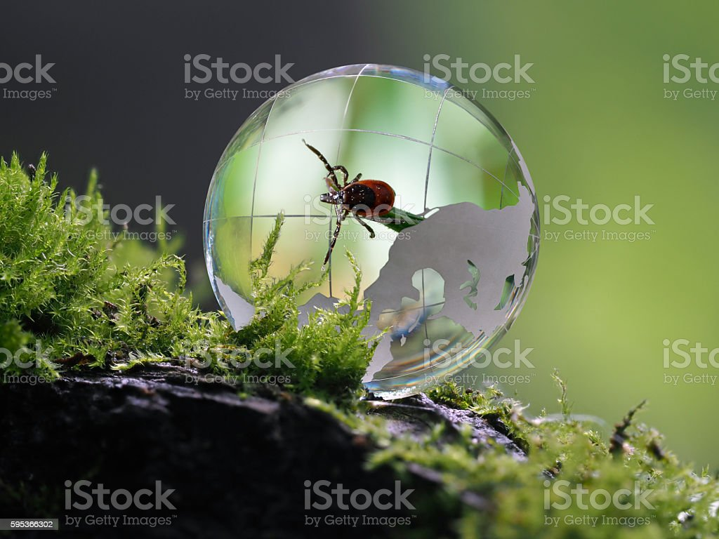 The tick inside a transparent sphere. Concept - encephalitis mites,...