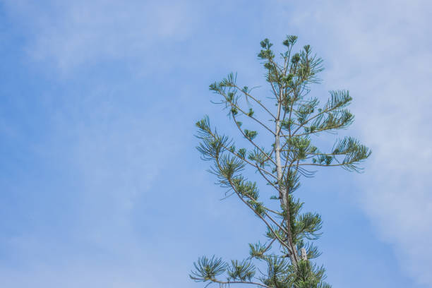 The top of the tree is held in the air with clouds and the sky as the background. stock photo